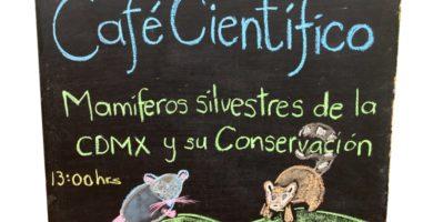 café científico ciudad mexico